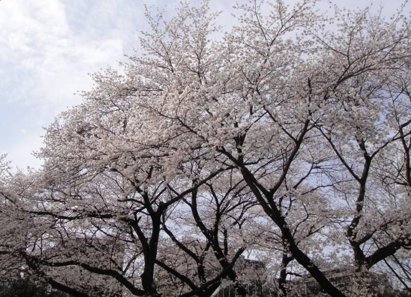 市議会3月定例会が閉会_f0059673_18493610.jpg