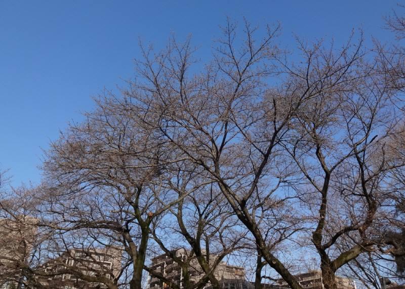 市議会3月定例会が閉会_f0059673_18501451.jpg