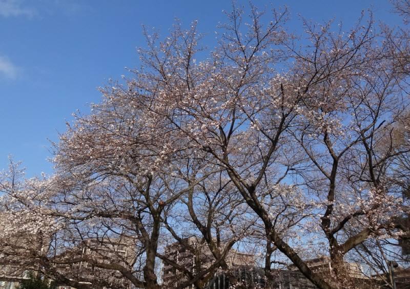 市議会3月定例会が閉会_f0059673_1850246.jpg