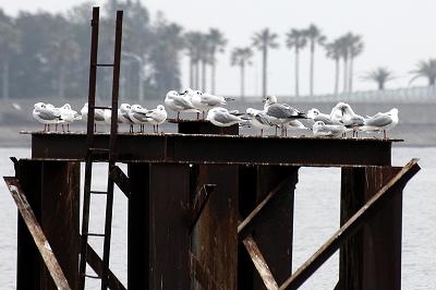 ★例年通り・・・先週末の鳥類園(2013.3.23~24)_e0046474_15411131.jpg