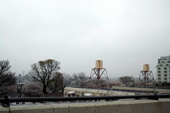 東京名残雨_c0182775_1912643.jpg