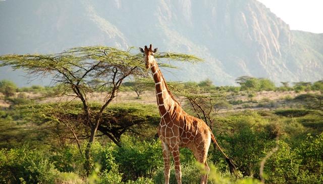 エキサイト GARVO(ガルボ) 「憧れのケニアへ、アドベンチャー・トリップ」_b0053082_2052795.jpg