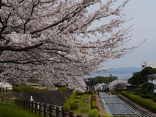 別府の桜 その2 境川辺り_b0175688_23154532.jpg