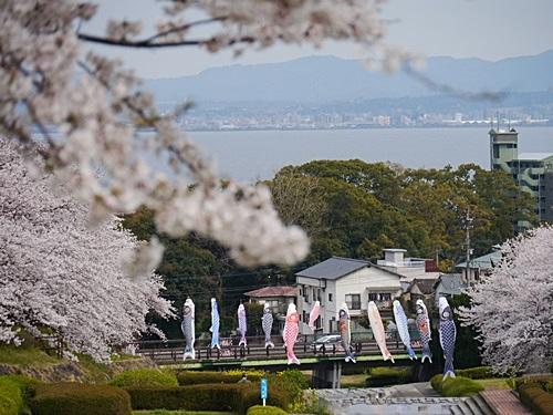 別府の桜 その2 境川辺り_b0175688_23161740.jpg