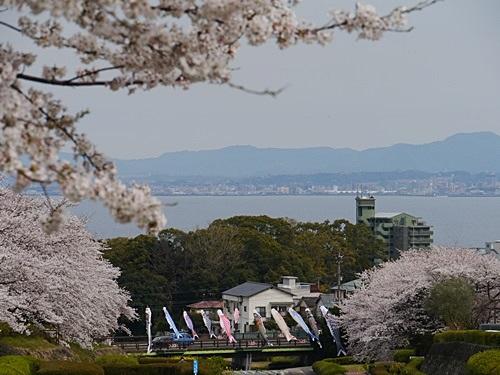 別府の桜 その2 境川辺り_b0175688_2316419.jpg