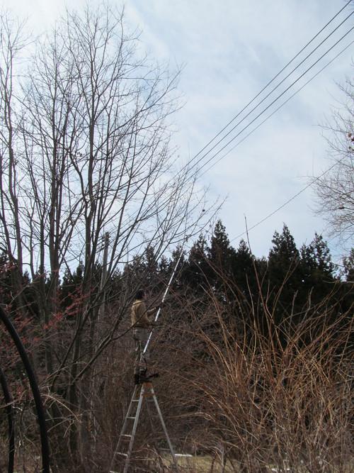 電線と木_f0213189_1952720.jpg