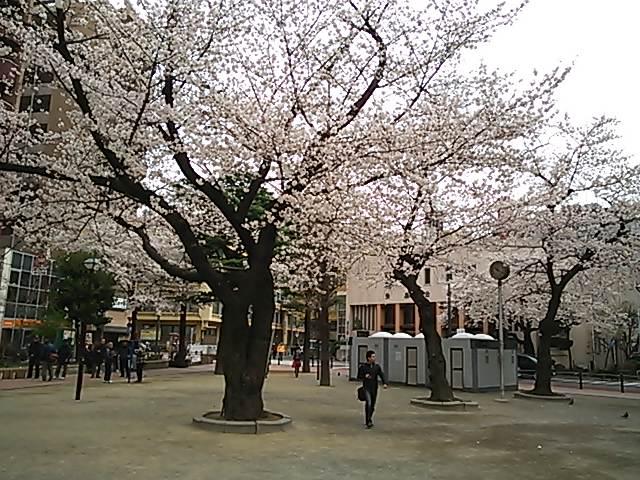 桜の季節になりました。_d0063290_21213855.jpg