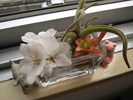 桜の季節になりました。_d0063290_2122258.jpg