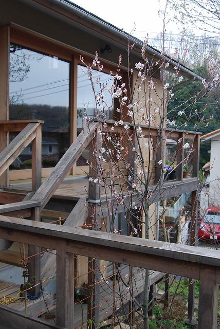 3月の庭…_c0124100_23314047.jpg
