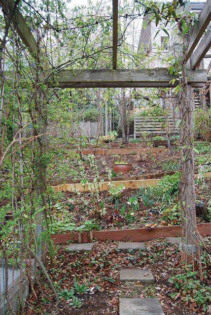 3月の庭…_c0124100_23315020.jpg