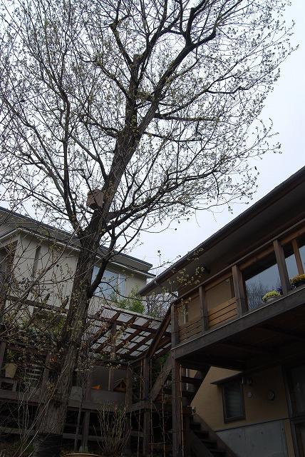 3月の庭…_c0124100_23315961.jpg