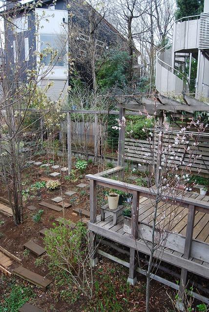 3月の庭…_c0124100_23323356.jpg