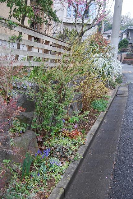 3月の庭…_c0124100_2333529.jpg