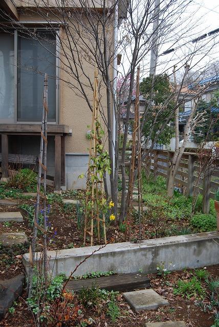 3月の庭…_c0124100_23431015.jpg