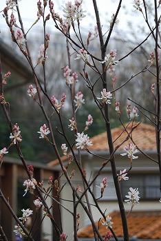 3月の庭…_c0124100_23524285.jpg