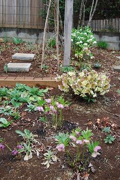 3月の庭…_c0124100_23525863.jpg