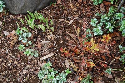 3月の庭…_c0124100_23531629.jpg