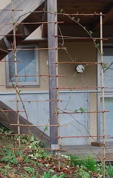 3月の庭…_c0124100_23532022.jpg