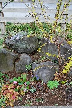 3月の庭…_c0124100_23533474.jpg