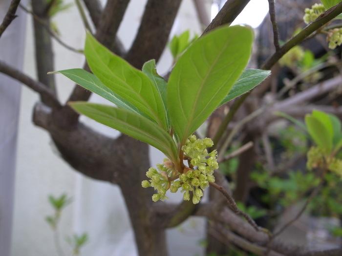 春の花-1_f0223603_191653.jpg