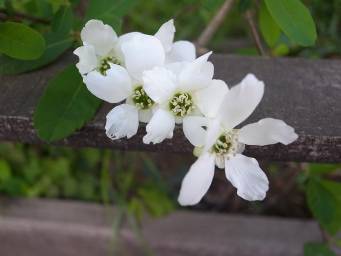 春の花-1_f0223603_1922966.jpg