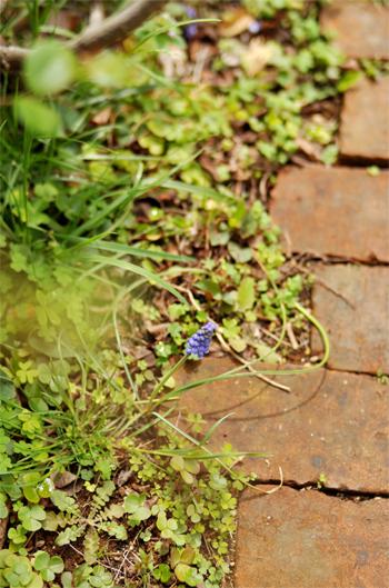 春の庭_d0174704_1934841.jpg