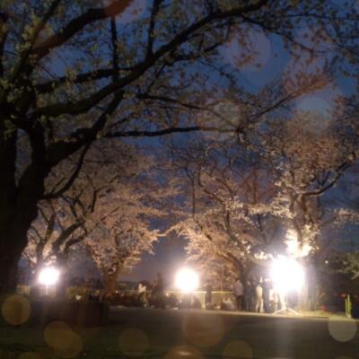 夜桜とお知らせ。_a0139911_173619.jpg