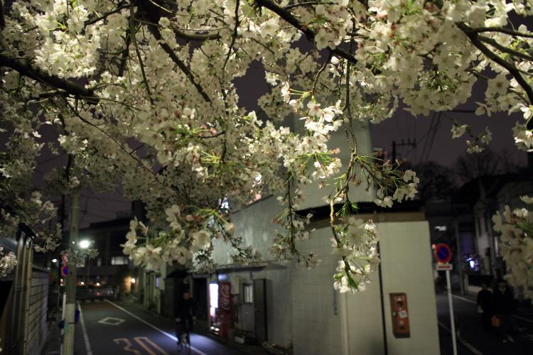 都電雑司ヶ谷  手持ち夜桜、法明寺_b0061717_011695.jpg
