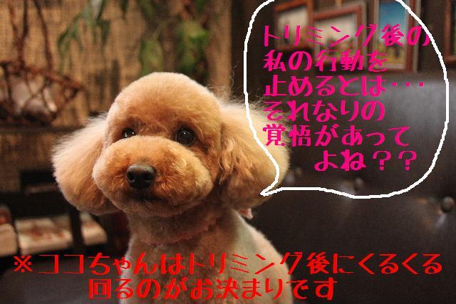 b0130018_9511032.jpg
