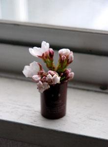 自宅で花見_e0103024_10221986.jpg