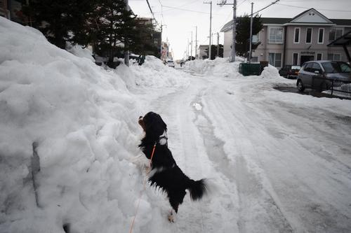 今日は天気予報ほどには気温が上がらなくて、寒い・・_c0051132_2129308.jpg