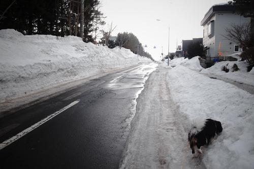 今日は天気予報ほどには気温が上がらなくて、寒い・・_c0051132_2129980.jpg