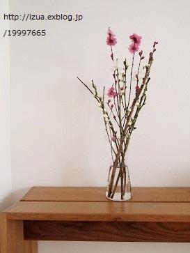 桃の花を飾る_e0214646_13302129.jpg