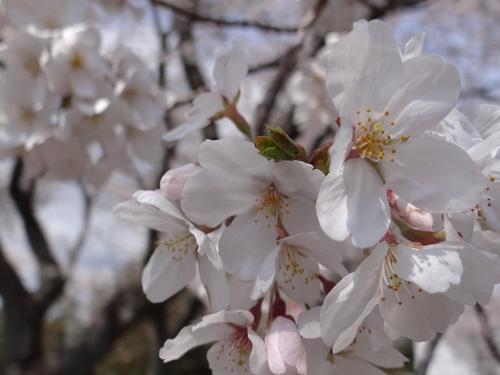 花の散る_e0240147_19453330.jpg