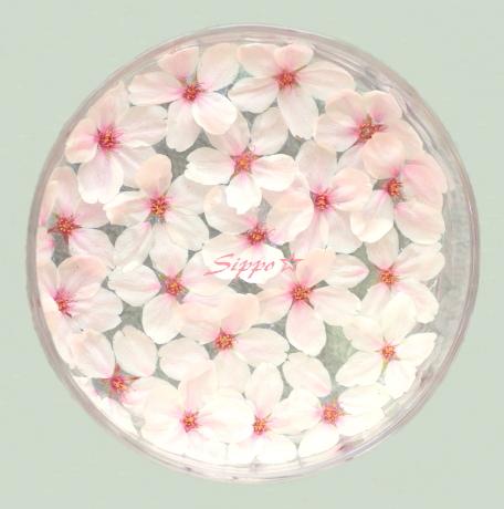 ■■ 桜 盆 ■■_c0195662_2241211.jpg