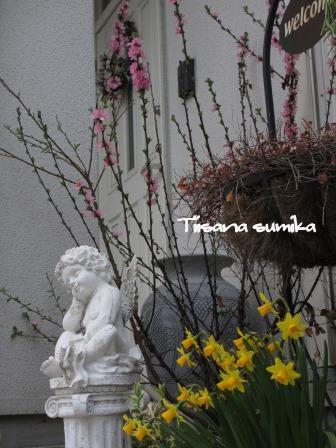 春めいた庭♪_a0243064_23174468.jpg
