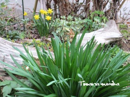春めいた庭♪_a0243064_2333811.jpg