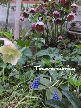 春めいた庭♪_a0243064_23345655.jpg
