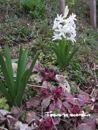 春めいた庭♪_a0243064_23505635.jpg