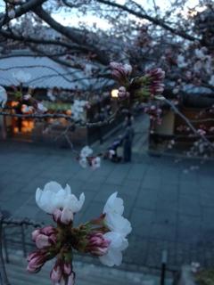 3月28日 桜の季節です_a0023466_2341081.jpg