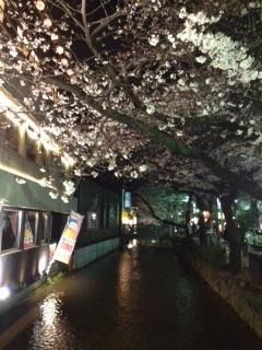 3月28日 桜の季節です_a0023466_23433163.jpg