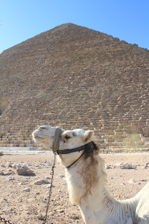 エジプトより♪                       EGYPT_e0184067_1284873.jpg