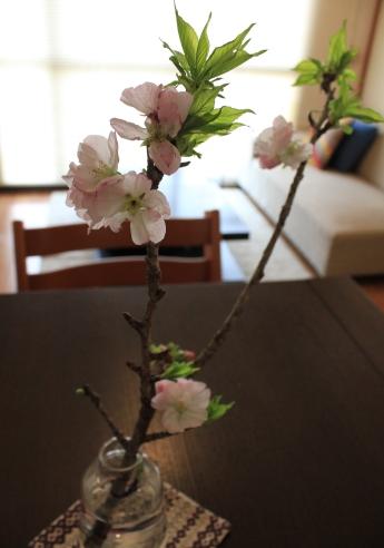 ・春の食卓。_d0245268_14263839.jpg