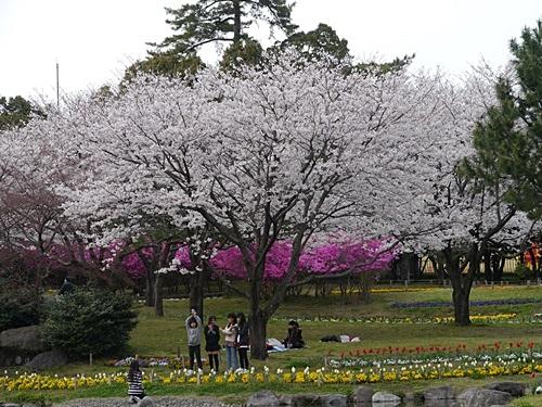 別府の桜 その3 別府公園で春の花と出会ってきました_b0175688_22515458.jpg