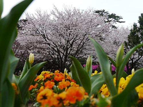 別府の桜 その3 別府公園で春の花と出会ってきました_b0175688_225228100.jpg