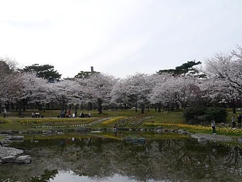 別府の桜 その3 別府公園で春の花と出会ってきました_b0175688_22525452.jpg