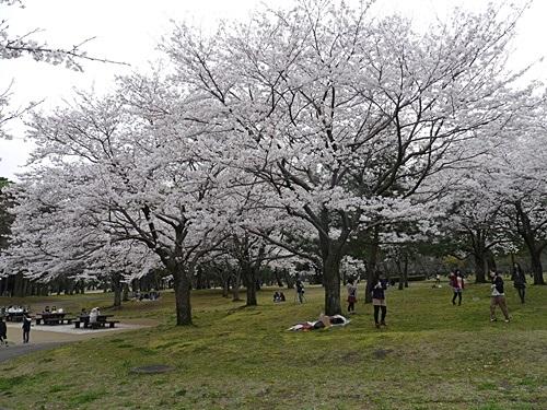 別府の桜 その3 別府公園で春の花と出会ってきました_b0175688_2253997.jpg