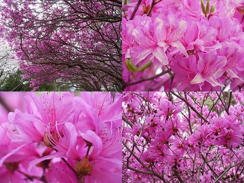 別府の桜 その3 別府公園で春の花と出会ってきました_b0175688_22564753.jpg