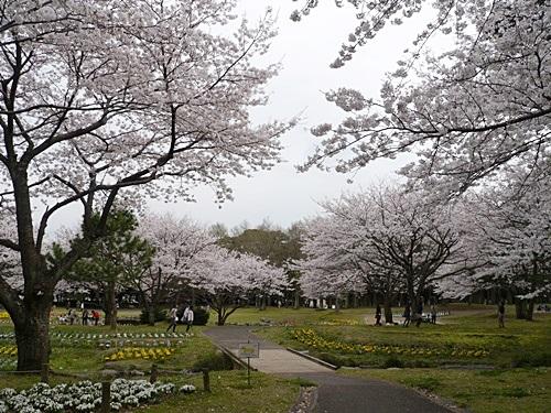 別府の桜 その3 別府公園で春の花と出会ってきました_b0175688_22591551.jpg