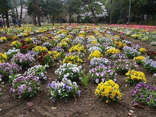 別府の桜 その3 別府公園で春の花と出会ってきました_b0175688_2304511.jpg